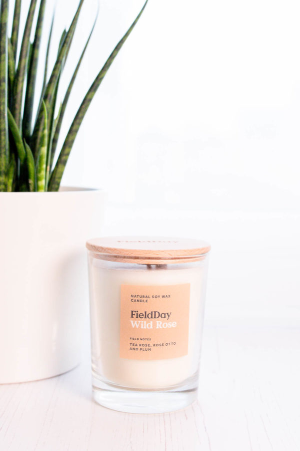 Wild rose candle with plant beside